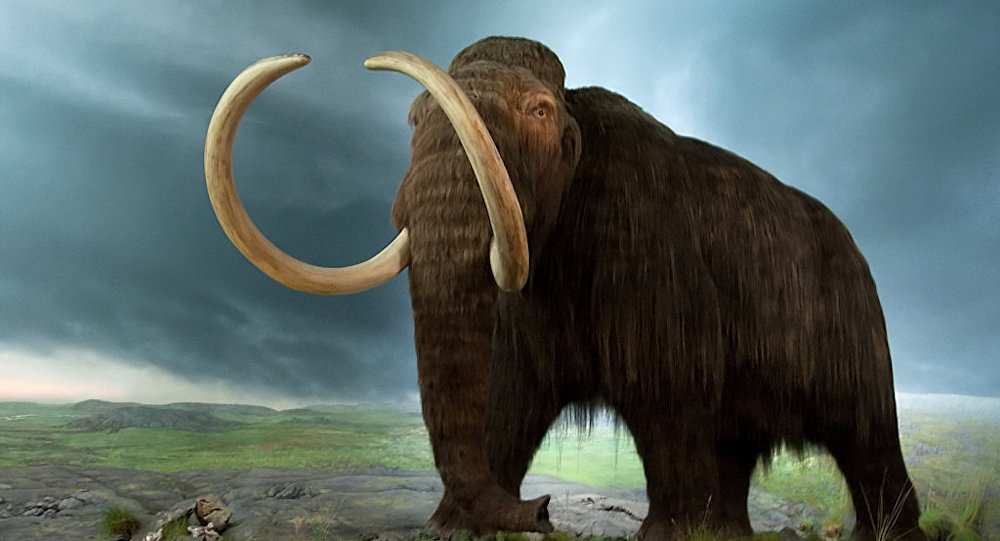 Woolly Mammoth on Verge of Resurrection