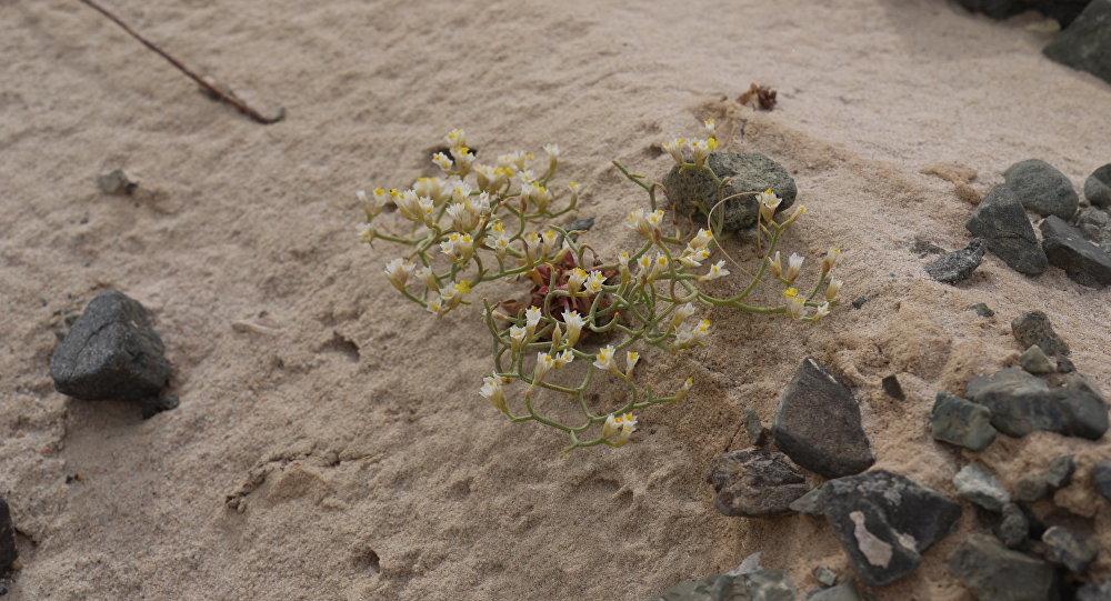 Togrogiin Shiree is an escarpment in the Gobi with an abundance of fossils.