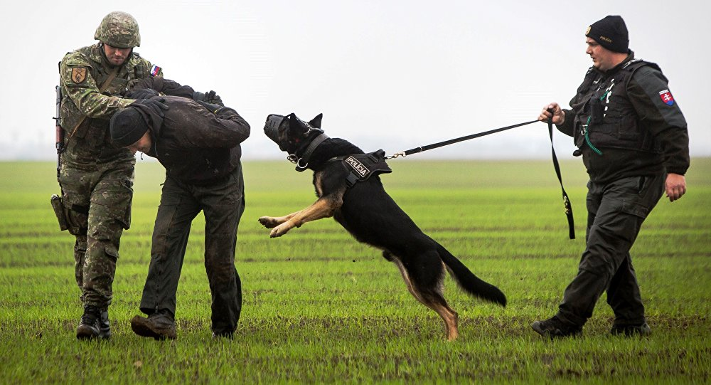 A Slovak soldier (L) and a Slovak policeman (R) with a dog detain a man playing the role of an illegal migrant during a joint exercise of Slovak police and Slovak Army.