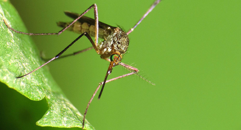Russia's former Surgeon General said that one of the possible causes for the spread of the deadly Zika virus outbreak could be the use of biological warfare.