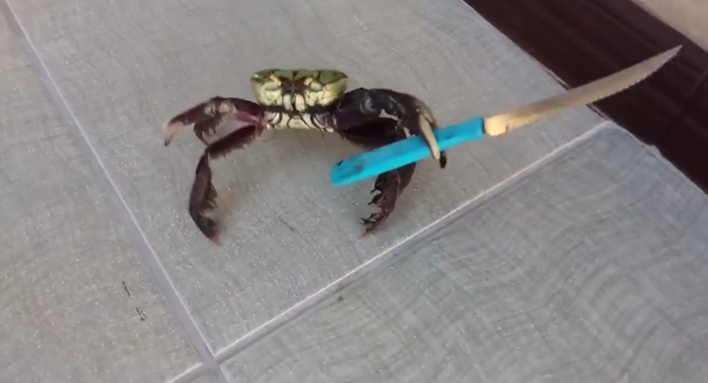 Hitler's angry tirade coupled paired with the crab armed with a knife is indeed a scary scene and the video predictably went viral on YouTube.