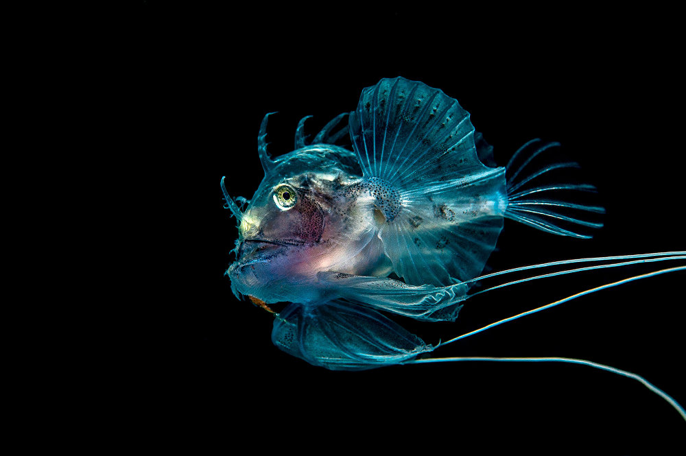 Aquatic Fantastic: 2016 Underwater Photographer of the Year Highlights