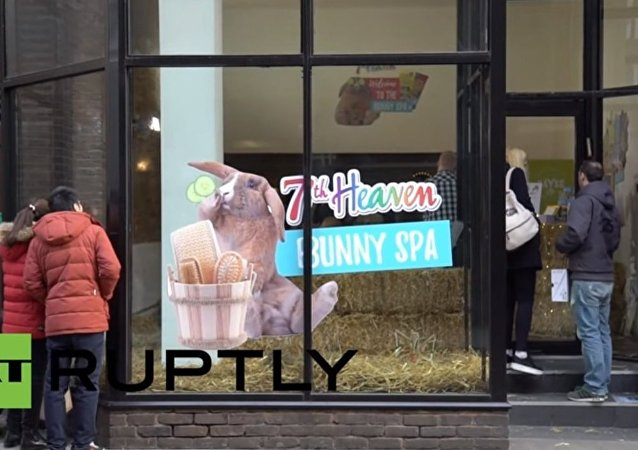 World's first bunny spa opens in London