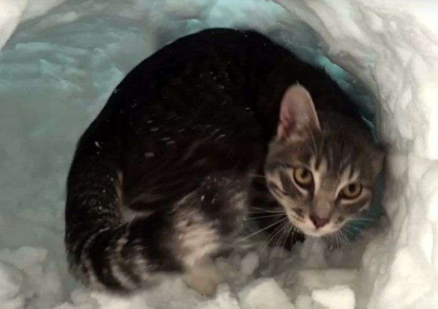 Snow Diggin' Kitten