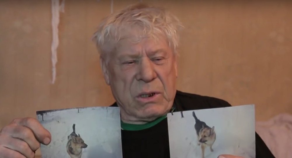Russia: Bratsk launches desperate search for pensioner's German shepherd Yan