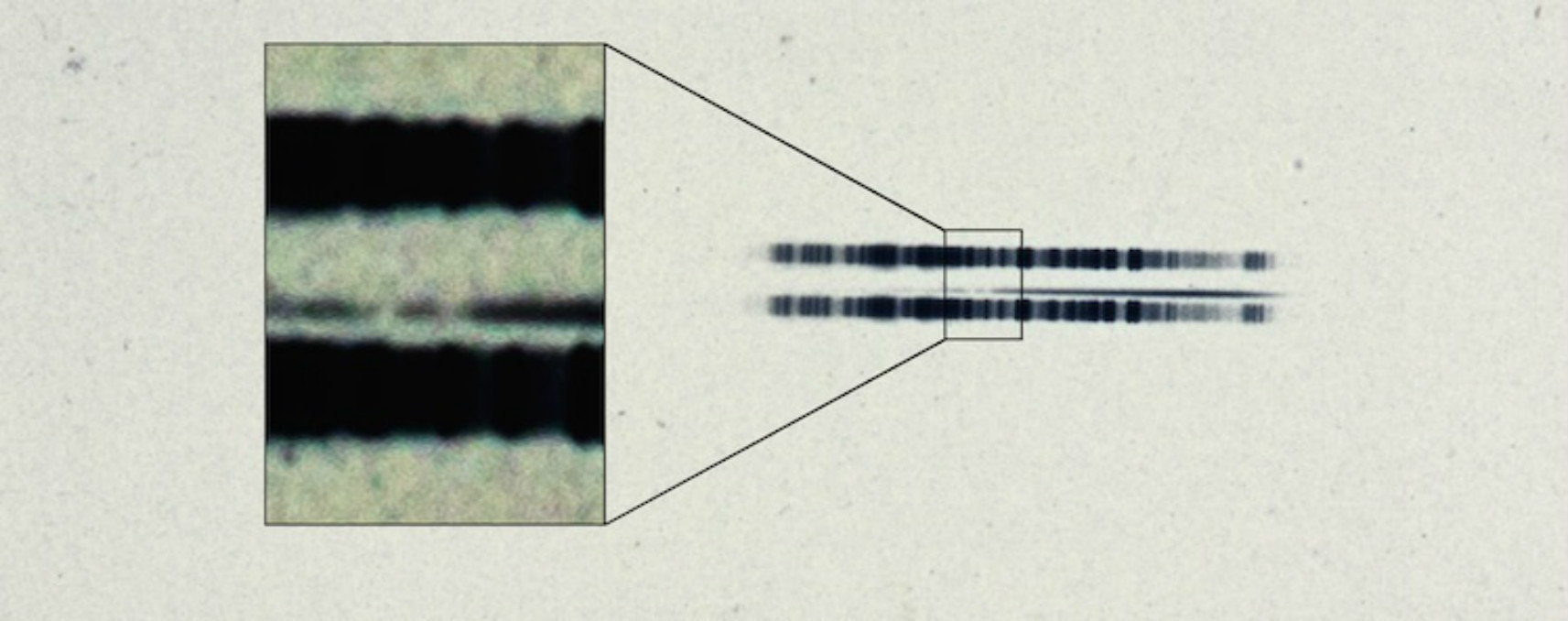 "The 1917 photographic plate spectrum of van Maanen's star from the Carnegie Observatories' archive. The pull-out box shows the strong lines of the element calcium, which are surprisingly easy to see in the century old spectrum.  The spectrum is the thin, (mostly) dark line in the center of the image. The broad dark lanes above and below are from lamps used to calibrate wavelength, and are contrast-enhanced in the box to highlight the two ""missing"" absorption bands in the star."