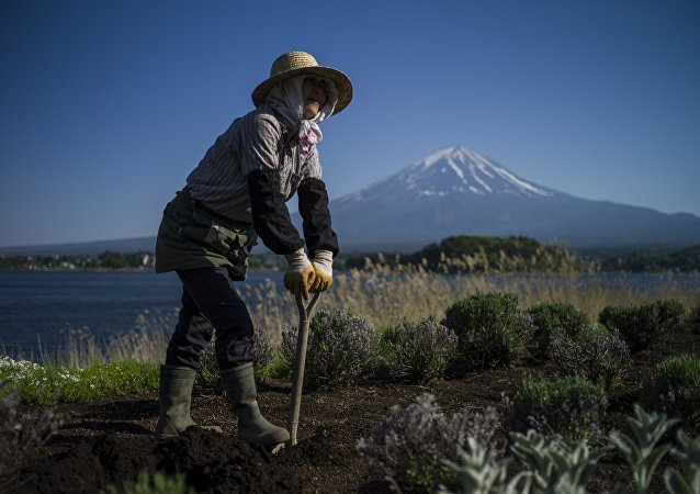 A Japanese gardener works by Kawaguchi Lake overlooking Mount Fuji in Fujikawaguchiko on May 13, 2015