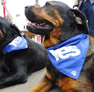 Scottish Elections