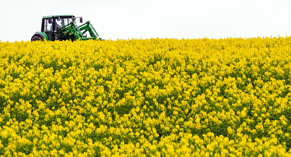 A farmer drives his tractor through a blooming rapeseed field near Doerflis, southern Germany, Wednesday, April 27, 2016.