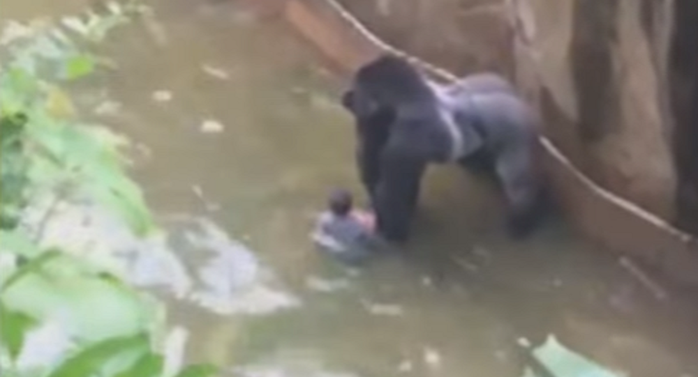 Ohio Zoo Insists Their Facilities Are Safe Amid Outcry Over Gorilla Death