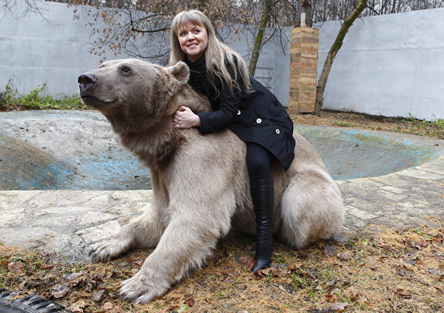 Stepan the Bear lives in Losiny Ostrov Park