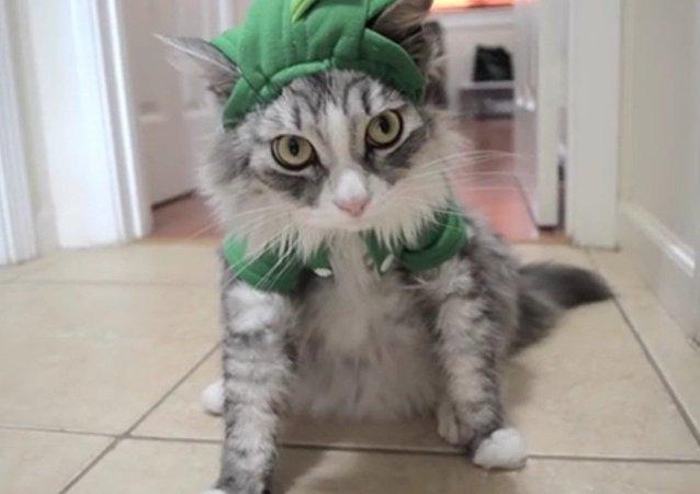 Dino Cat