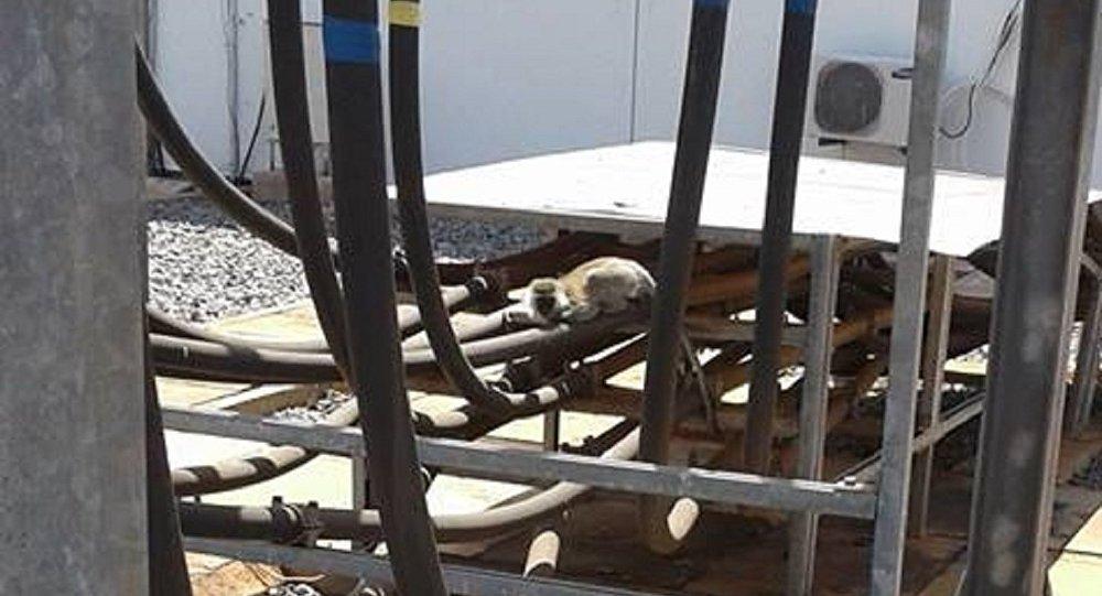 Monkey Behind Nationwide Blackout in Kenya