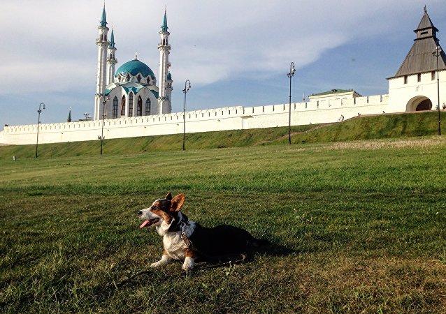 Pastushok on the background Kazan Kremlin