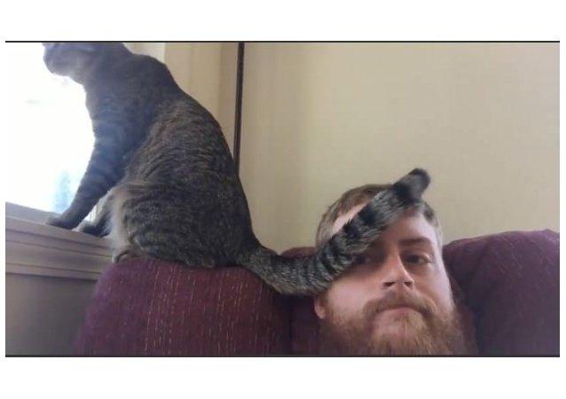 Cat Slaps Tail Across Owner's Face