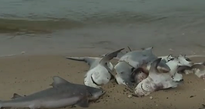 Dozens of Dead Sharks Wash Up on Alabama Beach