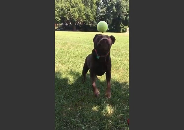 Ball Bounces off Dog's Mouth