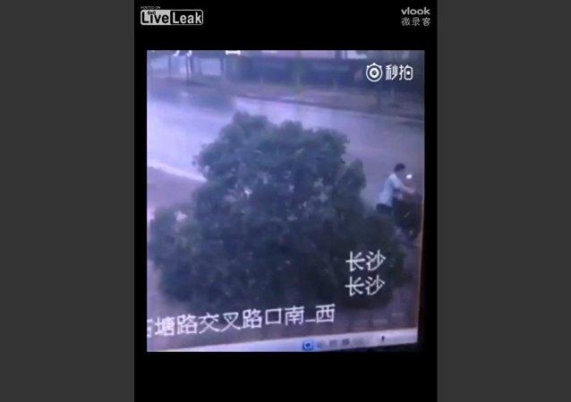 Man Kills Tree to Steal Bike