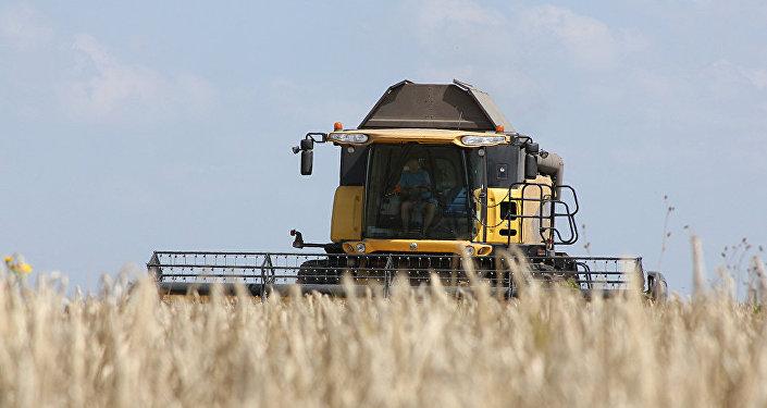 Harvesting in the Kursk region
