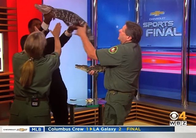 Gator Freaks Out Reporter TV News Blooper