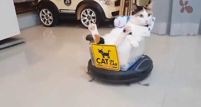 Funny Roomba Cat!!! Rides roomba hoover like a boss!