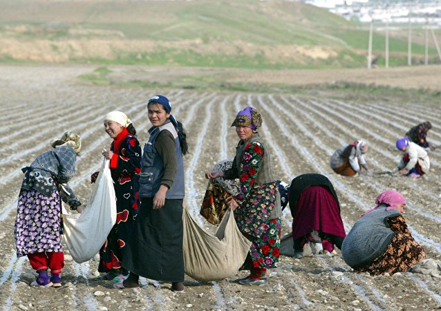 Women pick cotton near the town of Andijan, East of Tashkent, Uzbekistan, Wednesday, April 6, 2005