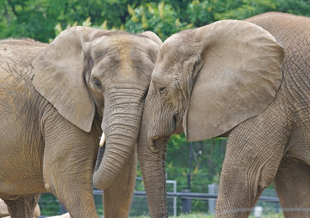 Africa Lost About 111,000 Elephants from Poaching in Last Decade