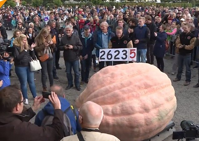 Belgian Gardener Sets New Guinness World Record by Growing the Biggest Pumpkin Ever