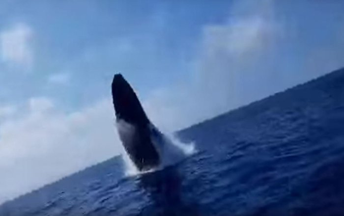 Humpback Whale Surprises Fishing Party