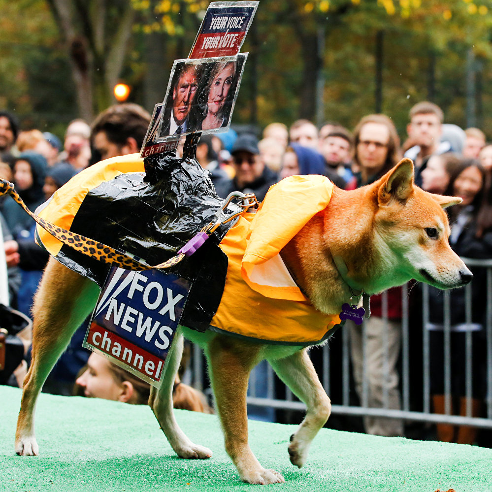A dog dressed as Fox News channel with the pictures of Democratic U.S. presidential nominee Hillary Clinton (R) and Republican U.S. presidential nominee Donald Trump takes part in the annual halloween dog parade at Manhattan's Tompkins Square Park in New York, U.S. October 22, 2016