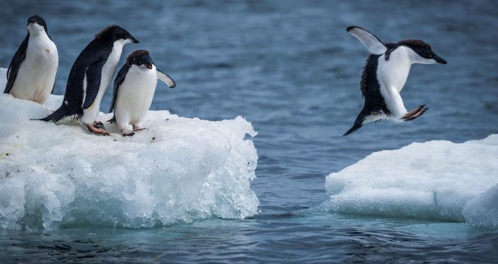Wild Wonders of Antarctica, Slated for Biggest Marine Reserve