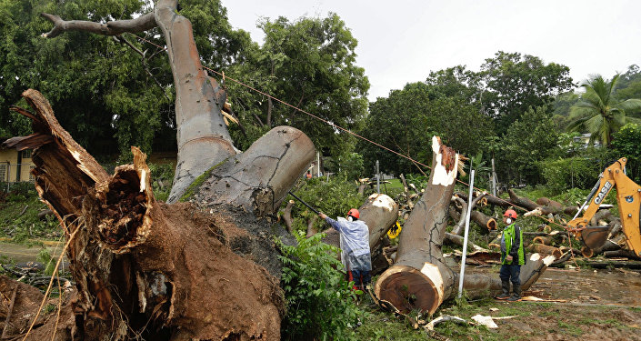 Workers cut a tree that fell and killed a boy outside a school in Panama City, Tuesday, Nov. 22, 2016