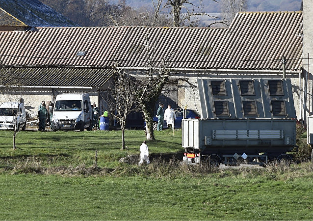 A truck for the carcasses of animals arrives as members of the French National Health and Safety Agency work on a duck farm in the municipality of Almayrac, Tarn, southwestern France, where the 'highly pathogenic' avian influenza H5N8 was detected