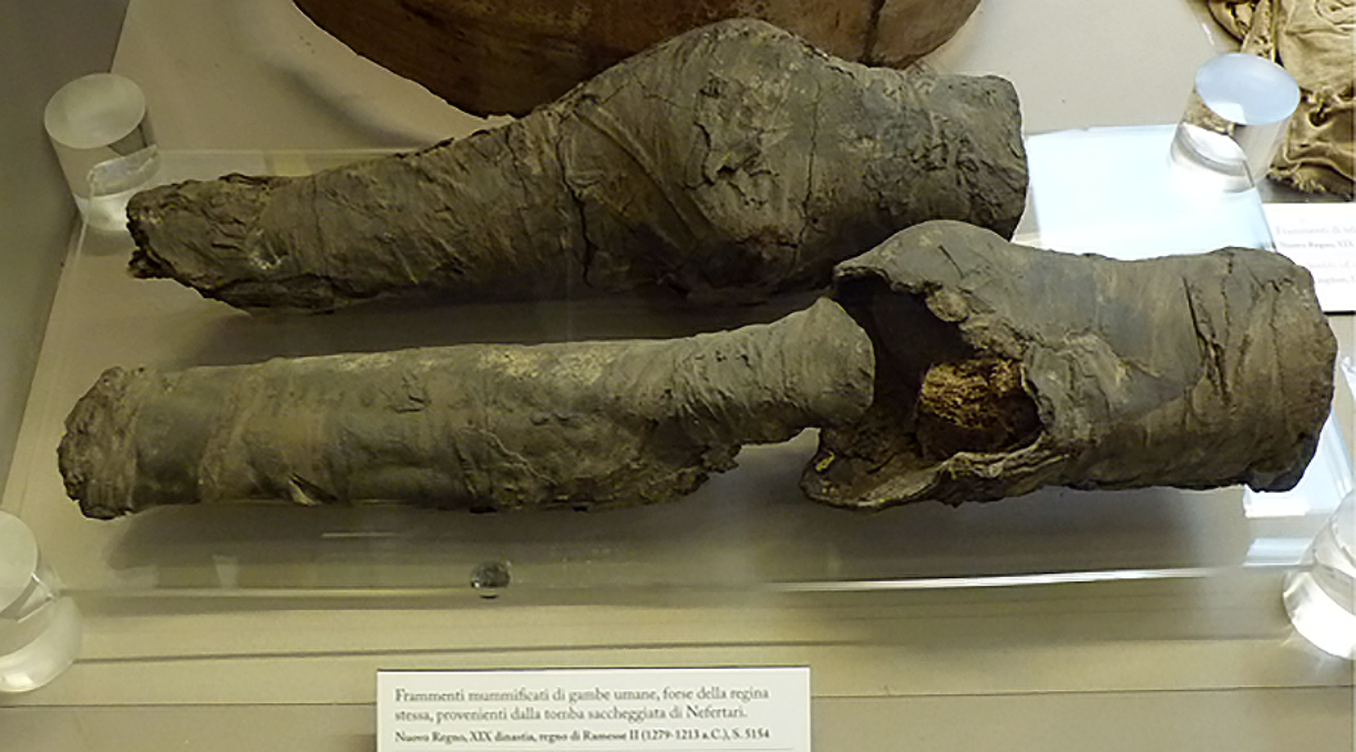 Mummified legs belonged to Queen Nefertari