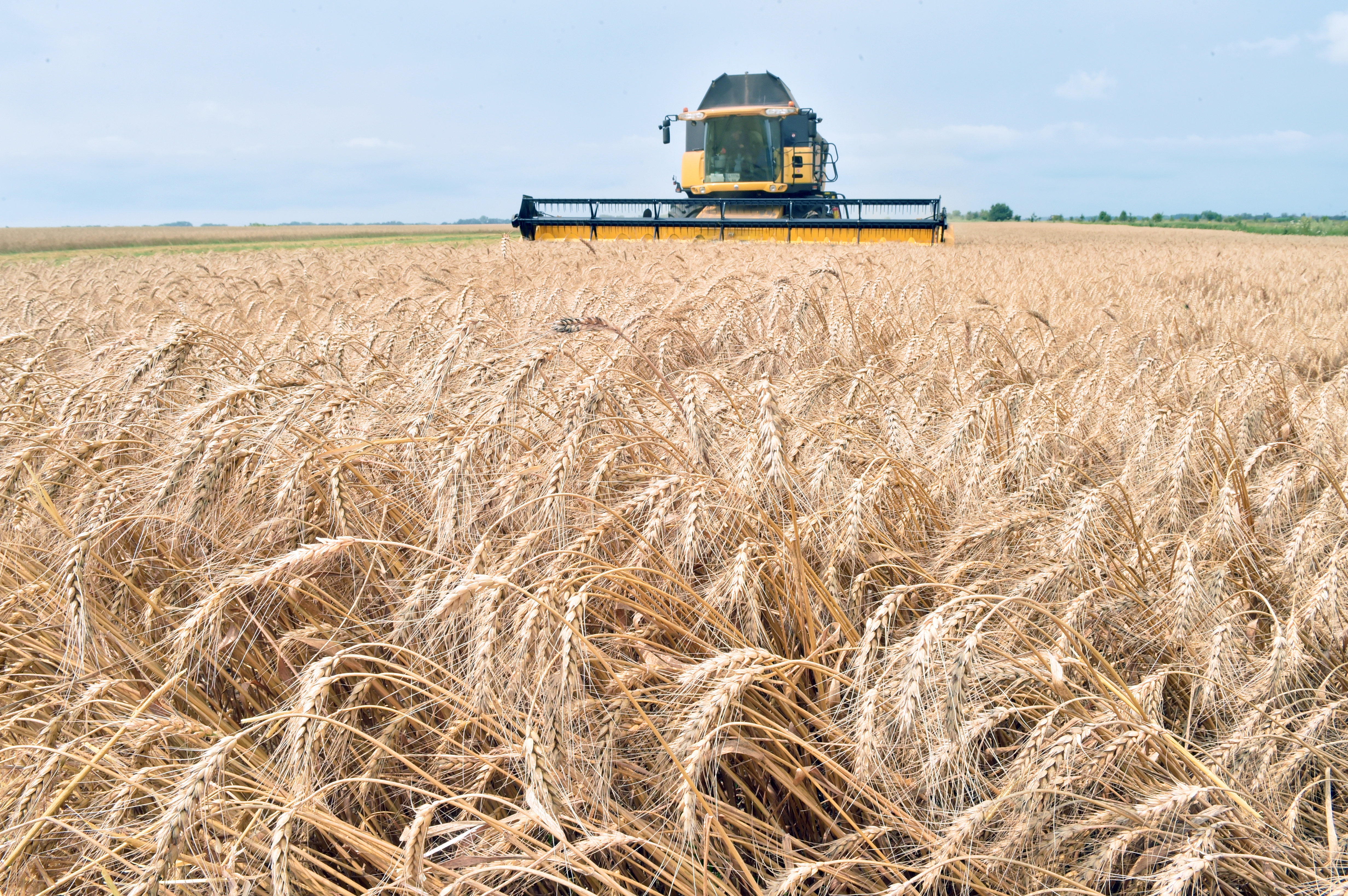 A combine harvester gathers grain from a field in Ukraine (file).