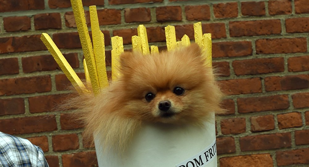 A dog dressed as french fries attends the 25th Annual Tompkins Square Halloween Dog Parade in New York October 24, 2015