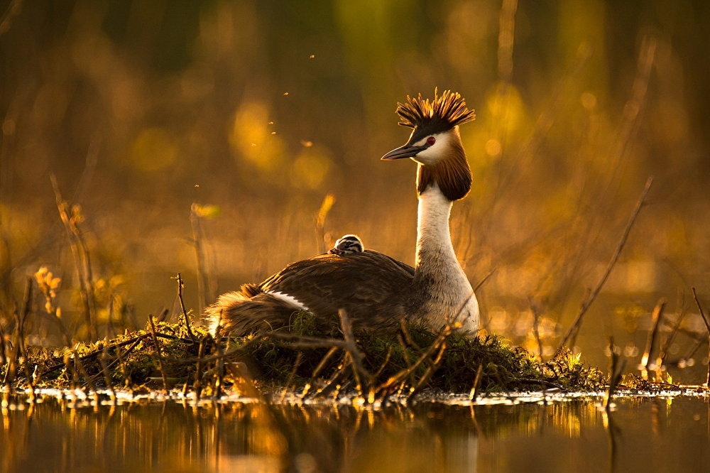 Best Photos of the Wildlife of Russia 2016 Contest