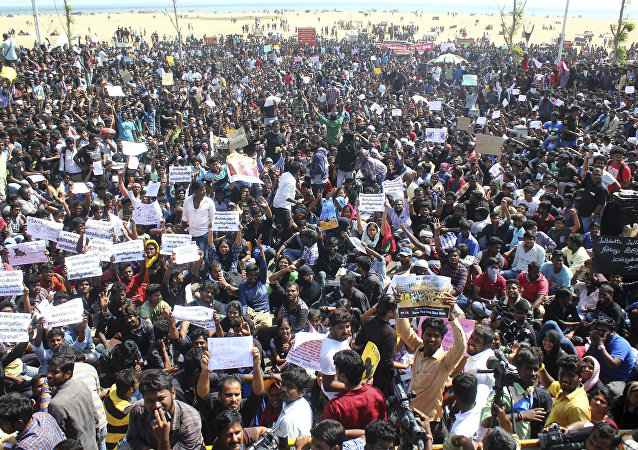 Protestors gather at Marina beach demanding a ban be lifted on the traditional sport of bull-taming, or Jallikattu, in Chennai, India