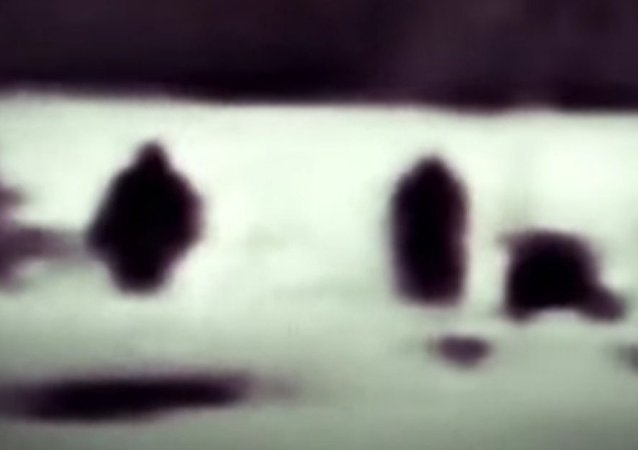 Bigfoot family' caught on camera in Yellowstone National Park