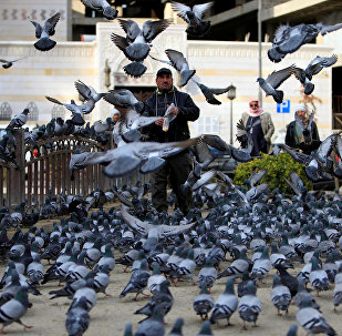 A man feed pigeons in Damascus, Syria January 28, 2017