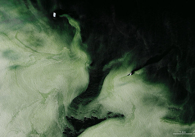 Antarctica's Granite Harbor, turned green by phytoplankton. The green has spread over 16 square miles of water.