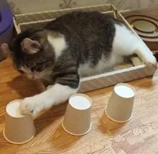 Cute cat shows off incredible skills with cup-and-ball game