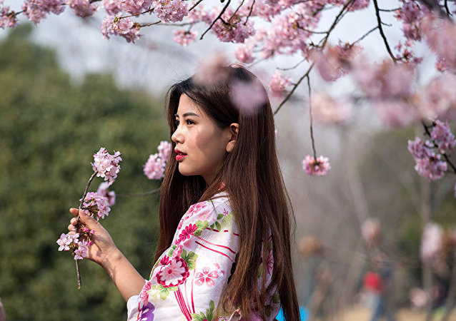Fleeting Beauty: Cherry Blossoms Bloom Across the World
