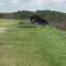 Horse Attacks an Alligator Only in Florida