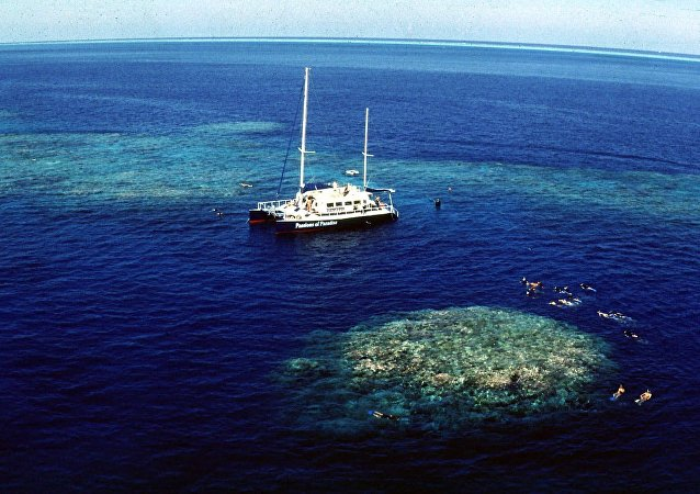 Tourists snorkel around Upolu Cay on the Great Barrier Reef near Cairns off the Australian north east coast