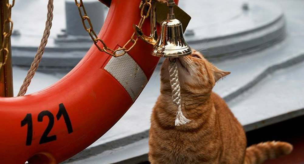 Orange tabby 'Seaman Sergei Ivanovich' rings the bell aboard the Russian Navy missile cruiser Moskva