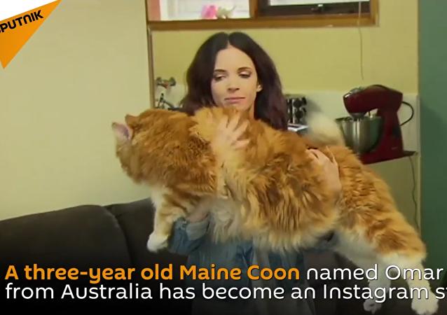 Meet Omar, World's Longest Cat