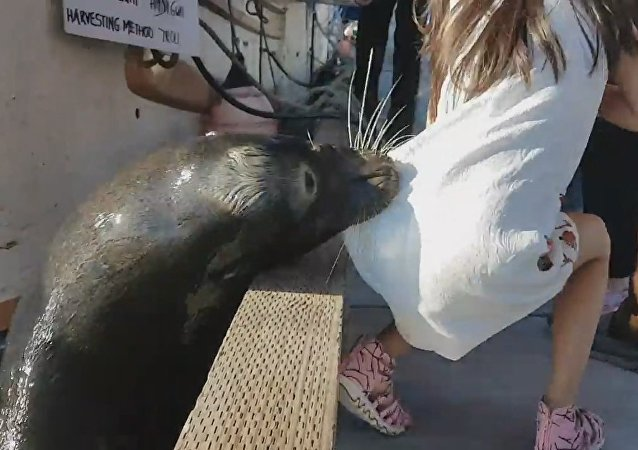 Killer Sea lion drags girl into Steveston waters