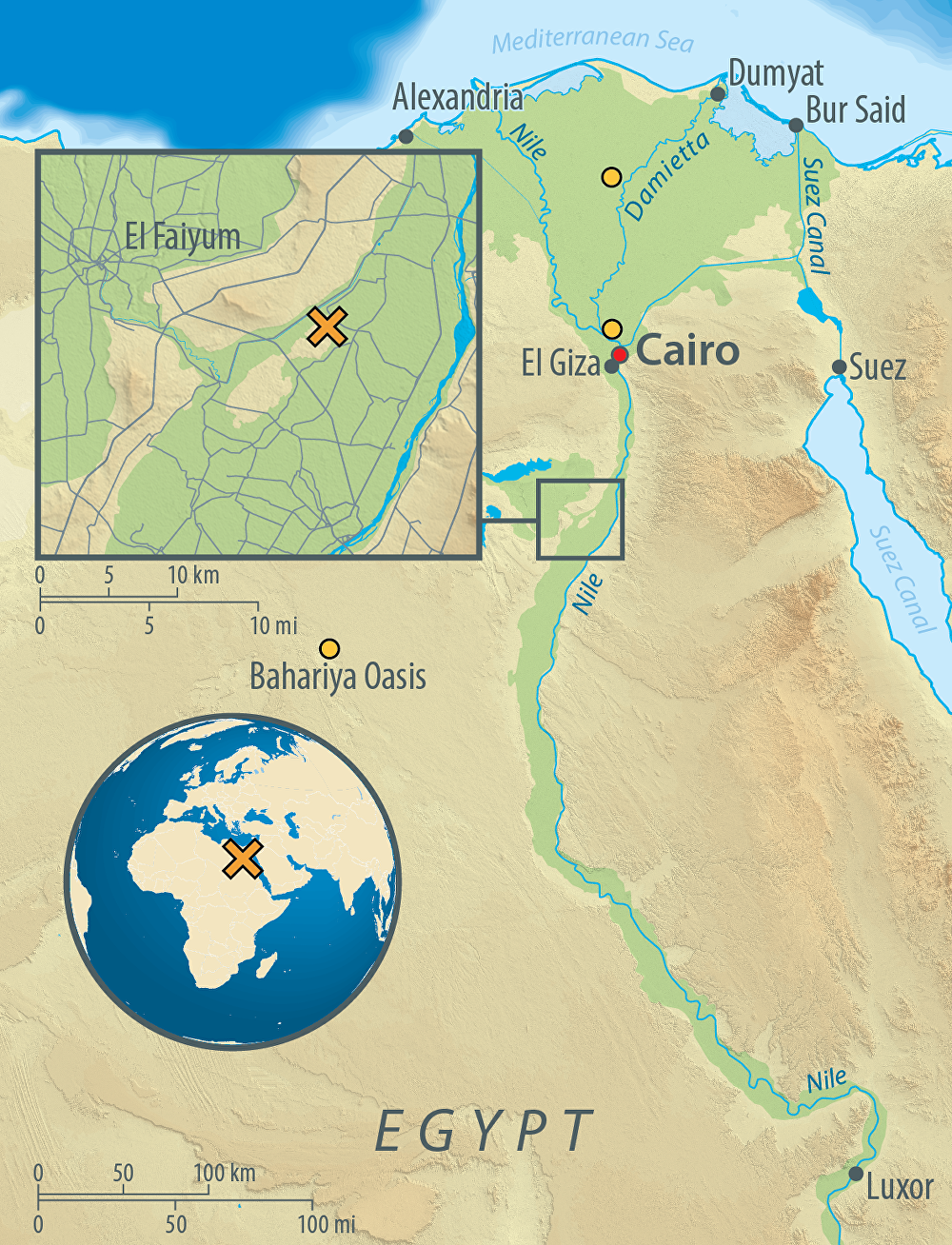 Map of Egypt, showing the archaeological site of Abusir-el Meleq (orange X), and the location of the modern Egyptian samples used in the study (orange circles).