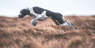 Human's Best Friends: Winners of the Dog Photographer of the Year Contest